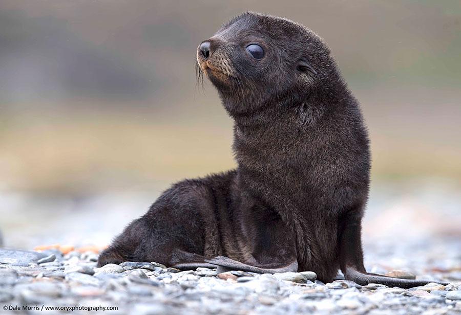 antartica photo safari
