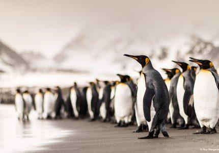 Antarctica Photo Cruise
