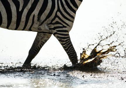 Great Migration Private Safari