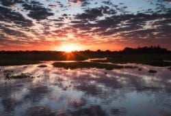 Pantanal Photography Tour