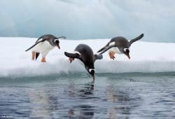 Penguins - Antarctica Photography Tours