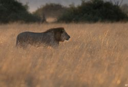 Botswana Private Photo Tour 1