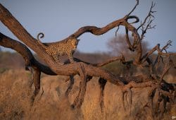 Chobe Photo Tours 1