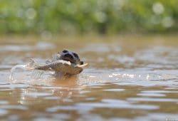 Pantanal Photography Tour