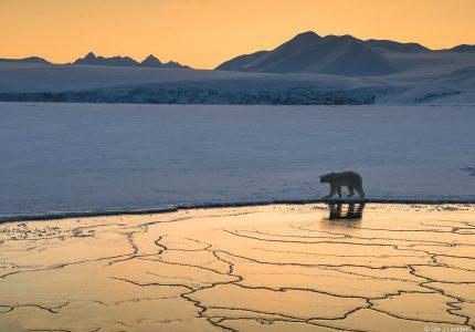 Polar Bear Photo Tours
