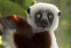 Madagascar Photo Tour