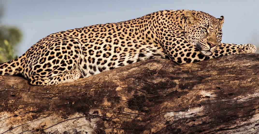 malamala photo safari