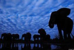 Elephant, Botswana Photo Safari
