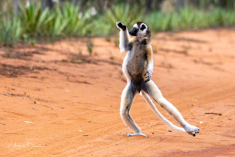 Madagascar photo tour
