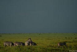 Tanzania Luxury Tours