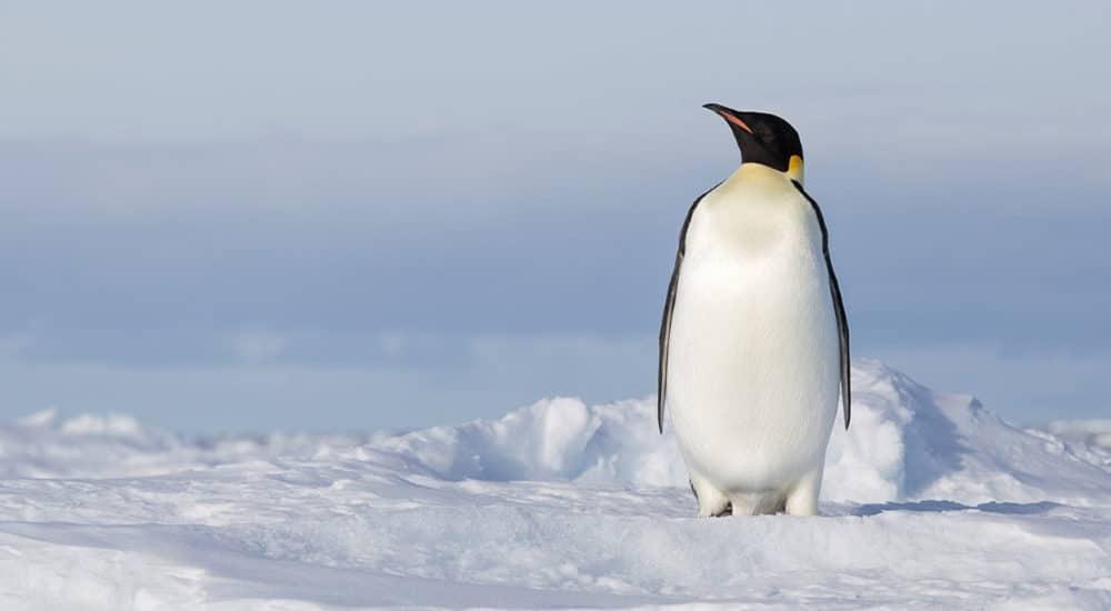 emperor penguin tour