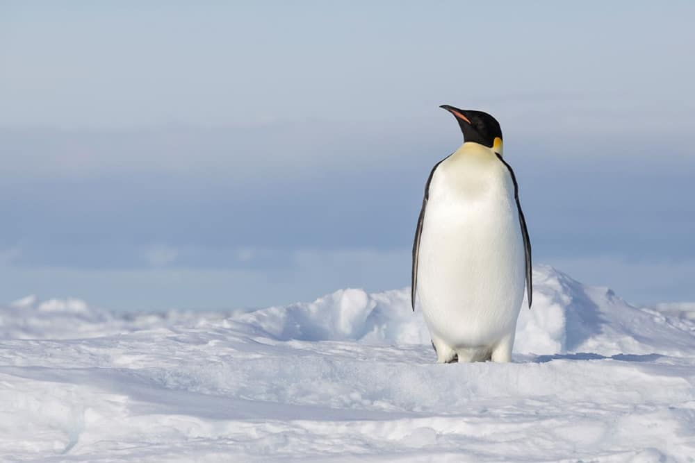 emperor penguin tour